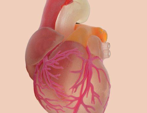 Pesquisador do InCor realiza estudo sobre impressão de coração 3D